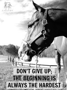 Horse Love Quotes, Equine Quotes, Horse Inspirational Quotes, Inspirational Horse Quote, Horse Quotes And Sayings, Training Quote, Cowgirl Horse Quotes, ...