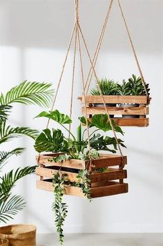 outdoor #plants artificial,  plants home delivery,  primal plants reviews,  buy house plants online,  indoor succulent plants identification,  #plant stand outdoor lowes,  plants zone 9 full sun.