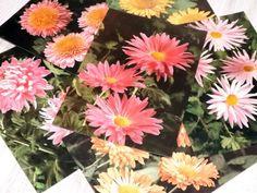 Vintage flower postcards  Chrysanthemum postcards  by LupusShop