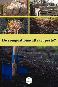 Composting food is important for reducing waste and living responsibly, but some gardeners are concerned that it will attract pests. Is this true? // Reducing Waste // Unwanted Pests // Food Composting // #compostingtips #infestation #compostingfood Raised Bed, Raised Garden Beds, Vegetable Garden Soil, Composting Methods, Woodlice, Kitchen Waste, Organic Soil, Dry Leaf, Reduce Waste