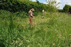 Wildes Ur-Handwerk! Sensen Dengel & Wetzen.... #sensen #naturmentoring #wildesurhandwerk #dengeln #scythes #scythes #sharpen #greengrass