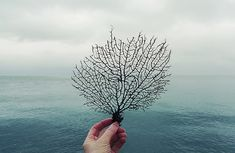 see the sea fan by wild goose chase, via Flickr