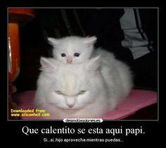 carteles gato venganza mono tierno principal lol caliente ultima foto desmotivaciones