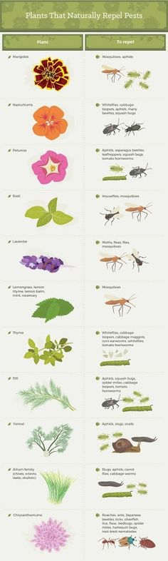 to Get Rid of Garden Pests For Good Plants that Naturally Repel Pests and other natural bug repellents.Plants that Naturally Repel Pests and other natural bug repellents. Organic Gardening, Gardening Tips, Vegetable Gardening, Organic Farming, Indoor Gardening, Garden Pests, Garden Bugs, Garden Art, Dream Garden