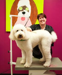 Dog Grooming in Houston and Katy, TX - Rover Oaks Pet Resort