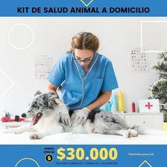 Y para todas las personas de cali  # no salgas de casa @veterinarios_a_domicilio  te presta el servicio para tu mascota,  super  recomendados ,  ahí les dejo el dato  #mascotas  #yomequedoencasa #veterinaria # domicilio  #perros  #gatos  #amolosanimales #amolosgatos #amolosperros Cali, Digital Marketing, Women, Gatos, Veterinarians, Pets, Woman