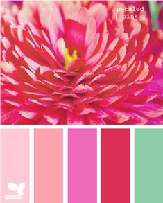 petaled pink color palette via Design Seeds... but much lighter blue (not green) and neutral walls...
