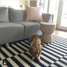 """Eadie says """"how we love hearing from happy Customers! This is a repost from @littlelibertyrooms, who made a happy home for our soft pink luca linen cushion, purchased from the amazing team @norsuinteriors Melbourne. Milo the gorgeous pooch is really the star of this shot though don't you think?  www.eadielifestyle.com.au #eadie_lifestyle #eadiecushions #linencushions #featherfilledcushions #linenbedspread #velvetthrows #linenthrows #aussiebrand #aussiecompany #beautifulhomewares…"""
