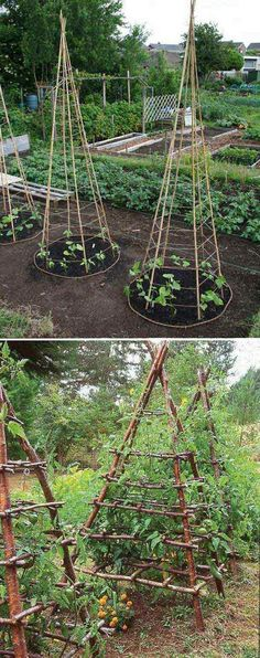 6. Build pea tepees structure to make the harvesting and maintenance more easier. - 22 Ways for Growing a Successful Vegetable Garden #gardenplanningideasfrontyards