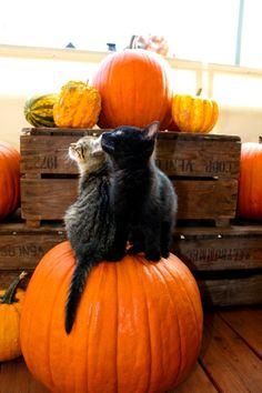 """autumntail: """"halloween - stock. by ramona-stock"""""""