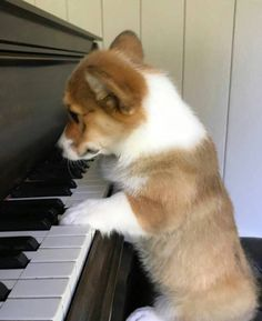 World of Corgi — This note right here makes the song sound so much...