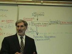 Professor Fink explains CELLULAR RESPIRATION (Part 4); Glycolysis & Fermentation - YouTube