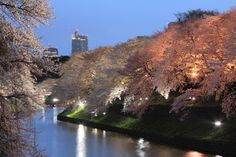 Chidorigafuchi Tokyo