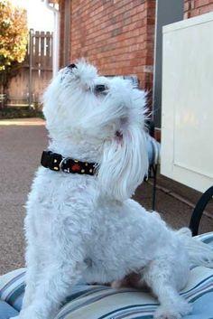 Dog collar tutorial--DIY! WARNING: these are ADDICTIVE!
