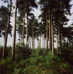 Thetford Forest 2 by jakem, via Flickr