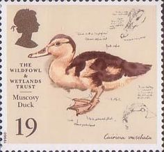 The Wildfowl and Wetlands Trust 1946-1996 19p Stamp (1996) Muscovy Duck  More about collecting stamps : http://sammler.com/stamps/