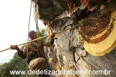 DEDETIZADORA TSERV : ABELHAS GIGANTES DO HIMALAIA
