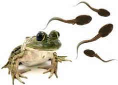 frog life cycle . com..... has a bunch of info.. and list of links to more...