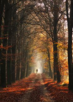 Nijmegen Forest - I move to Nijmegen in 8 weeks I can't wait to look for this place