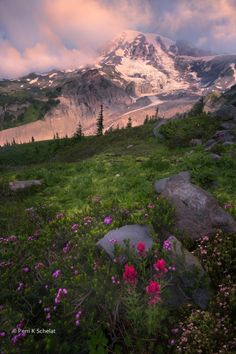 Photo Nature's Rock Garden by Perri Schelat~Mt. Rainier NP, WA*