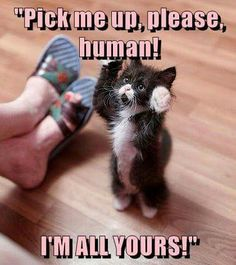 Give Me Cuddles Please - LOLcats is the best place to find and submit funny cat memes and other silly cat materials to share with the world. We find the funny cats that make you LOL so that you don't have to. Cute Cat Memes, Funny Animal Jokes, Cute Funny Animals, Funny Animal Pictures, Funny Cute, Funny Pics, Funny Memes, Cute Baby Cats, Cute Little Animals