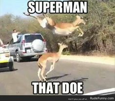 Superman that doe - http://www.rudefunny.com/memes/superman-that-doe/