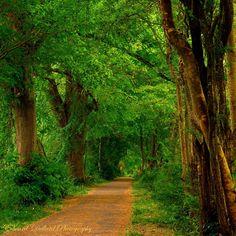 Ireland. I love wooded paths