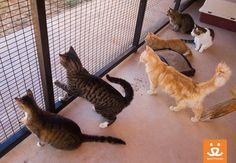 The cats of Casa de Calmar scan the perimeter on lizard patrol duty.