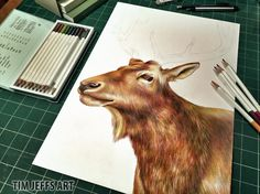 Only the Antlers to Go! Drawn with Tombow Irojiten colored pencils, Woodlands Dictionary Set.