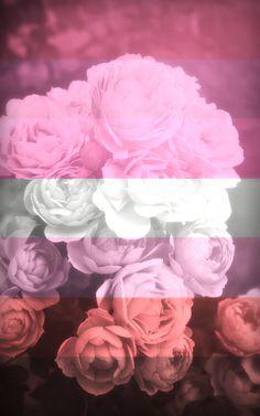Wallpaper Tumblrs, L Wallpaper, Lesbian Art, Lesbian Pride, Lgbtq Flags, Gay Aesthetic, Bubbline, Cute Wallpapers, Aesthetic Wallpapers