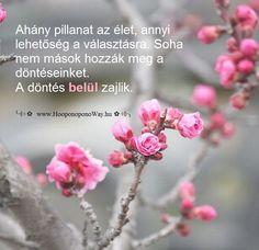 Hálát adok a mai napért. Hálát adok a bölcsességért, amit mindannyian ajándékul kaptunk. Ahány pillanat az élet, annyi lehetőség a választásra. Soha nem mások hozzák meg a döntéseinket. A döntés belül zajlik. Így szeretlek, Élet!  ╰⊰⊹✿ Köszönöm ♡ Szeretlek εїз Ho'oponoponoway ✿⊹⊱╮ www.HooponoponoWay.hu