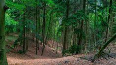 Reichswald Kleve