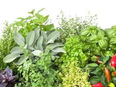 4 Herbs Not at the Farmers' Market (That You Should Sell) - Hobby Farms Spice Garden, Veg Garden, Edible Garden, Farm Business, Green Business, Homestead Farm, Flower Pots, Flowers, Flower Farm