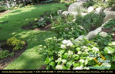 This photo shows a shady hillside landscaped with hydrangea and a variety of perennials.  Large stones form a retaining wall for a second level of plantings.