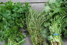 Proč sbírat a konzumovat plané rostliny? - JEDLÉ ROSTLINY - PODROBNÝ PŘEHLED