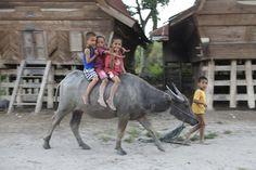 The Batak traditional village  Samosir Island - Lake Toba, Sumatera