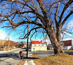 Around Roanoke, VA (A Daily Photo Blog): Old Tree