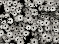 26 best pictures of flowers in black white images on pinterest pictures of black and white flowers google search black and white wallpaper black and mightylinksfo
