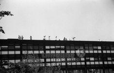 Geiselnahme von München, 1972 mforstner/Timeline Images #blackwhite #bw #schwarzweiß #sw #Fotografie #photography #blackandwhitephotography #photo #image #Bild #Foto #Kamera #camera #historisch #historical #traditional #traditionell #retro #nostalgic #vintage #Olympiapark #Olympiastadion #70er #70s #München #Munich #OlympischeSpiele #Olympics #Park #Architektur #Bayern #Oberwiesenfeld #Olympia #Olympiade #Olympiagelände #Sehenswürdigkeit #Sommerolympiade #Zeltdach #bayerisch #Attentat Fest Des Fastenbrechens, Parks, Utility Pole, Olympic Games, Summer Games, Old Pictures, Photographers, Parkas