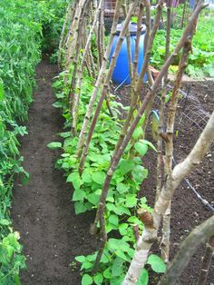 Allotment Garden: Trench Hugelkultur and hot bed. Allotment Plan, Allotment Gardening, Organic Gardening, Amazing Gardens, Beautiful Gardens, Organic Fruits And Vegetables, Grow Organic, Grow Your Own Food, Balcony Garden