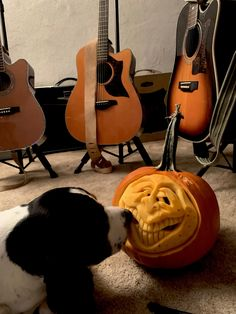 Pumpkin Pictures, Cow, Animals, Animales, Animaux, Cattle, Animal, Animais