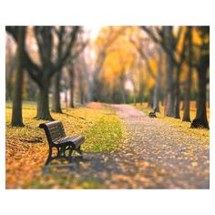 Fall landscape, nature, yellow golden trees, woodland, home decor wall... ❤ liked on Polyvore