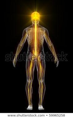 skeleton pierdere în greutate)