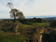 A lone tree stands on Lone Tree Hill.