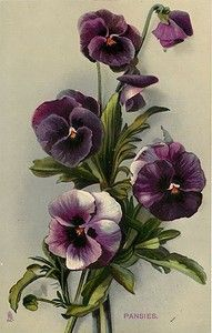 Vintage Botanical Illustration of Pansies Vintage Flowers, Vintage Floral, Vintage Art, Vintage Drawing, Vintage Flower Tattoo, Arte Floral, Flower Prints, Flower Art, Cactus Flower