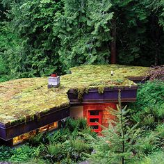 Roy Hellwig's moss-covered roof.