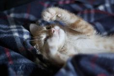 So cute! #kitten interesting how the front paw is out of focus but the rest of the image is super sharp