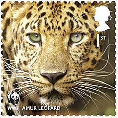 United Kingdom: (2011) World Wildlife Fund (WWF) stamp to celebrate the years 50th anniversary. With each featuring one of the world's threatened species. The 'Amur Leopard' is one such.