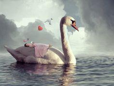 safe on a swans back