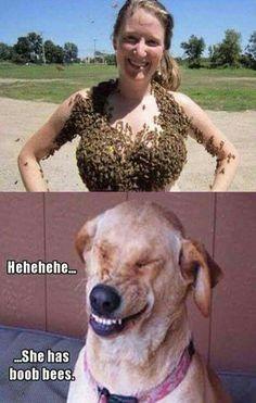 Dog's sense of humour.  Lol.  I love it!